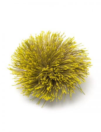 Cool Wattle Flower Welcome Brooch - Mustard
