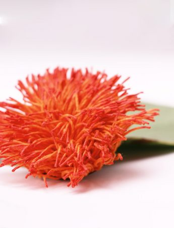 Fiery Orange Wattle Brooch